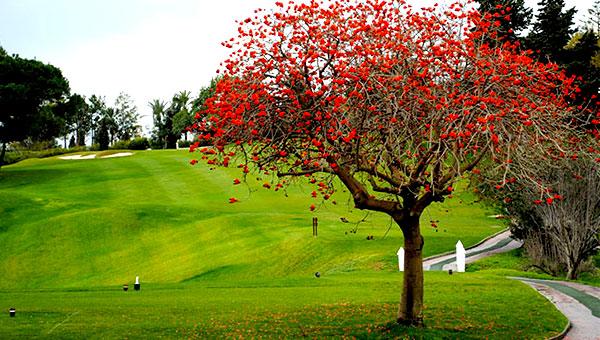 Recorrido Aloha Golf Club 2019